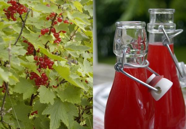 Saft av röda vinbär