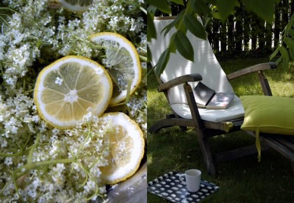 fläderblomst i trädgård